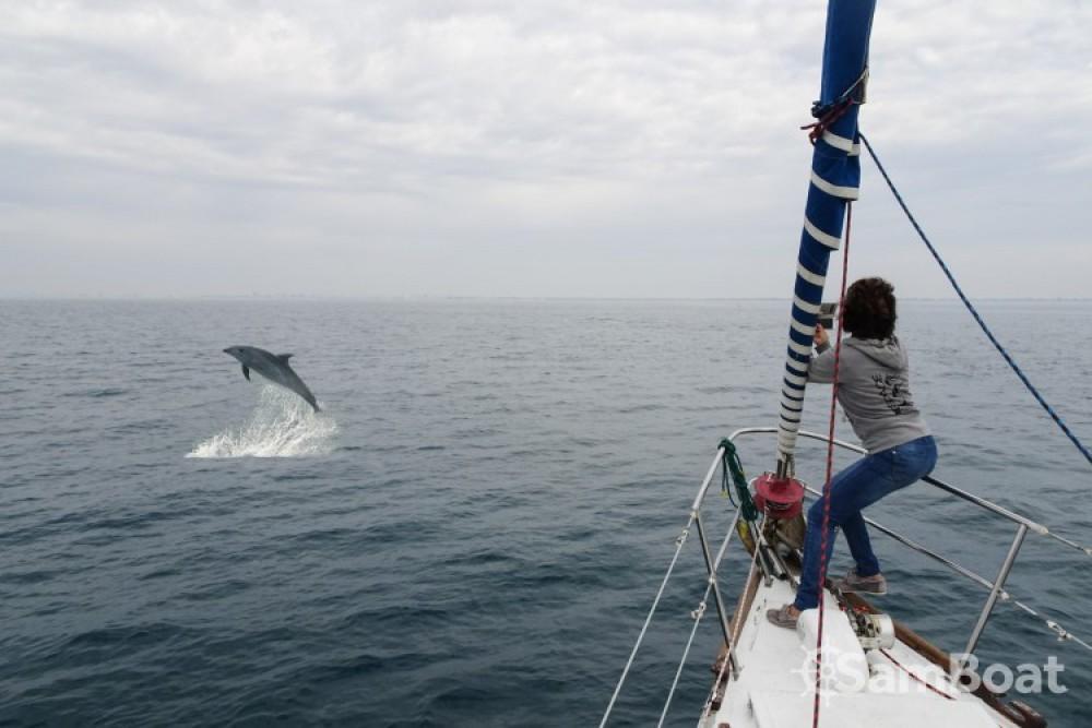 Noleggio yacht Le Grau-du-Roi - Freedom 12 metres su SamBoat