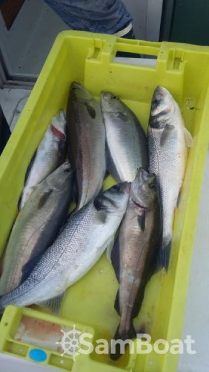Noleggio barche Bénéteau Antares 620 Fishing Loctudy su Samboat