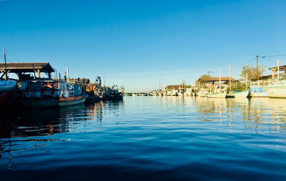Noleggio barche Quicksilver Activ 555 Open  su Samboat
