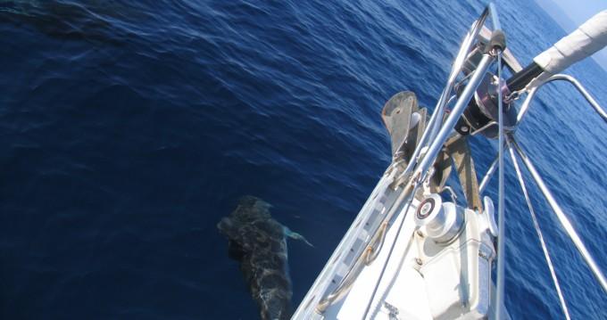 Noleggio barche Marína economico Triton 48